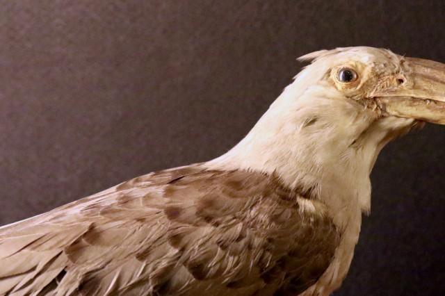 Calendario Mostre Ornitologiche 2019 Sicilia.La Collezione Ornitologica Centro Di Ateneo Per I Musei